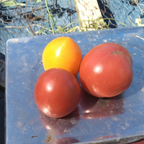 1 Pound Mixed Heirloom Tomatoes