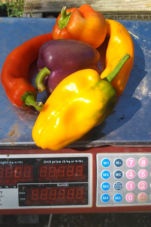 Colored Peppers -1 Pound