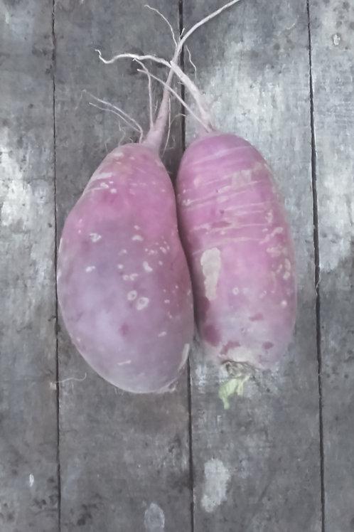 Korean Purple Daikon Radish - 1 pound