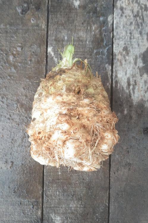 Celeriac - bulk