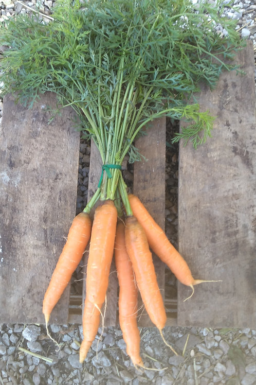 FRESH Orange Carrots - 1 bunch