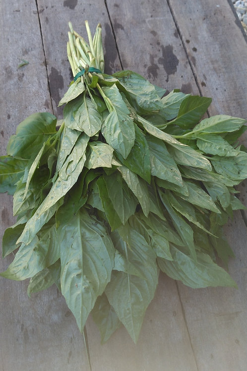 Basil - 1 Bunch