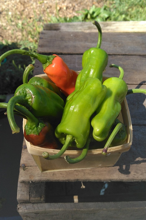 Shishito Peppers - 1 Pint