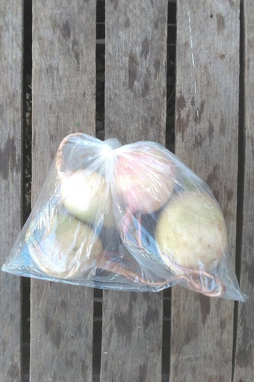 Watermelon Radishes - 1 Pound