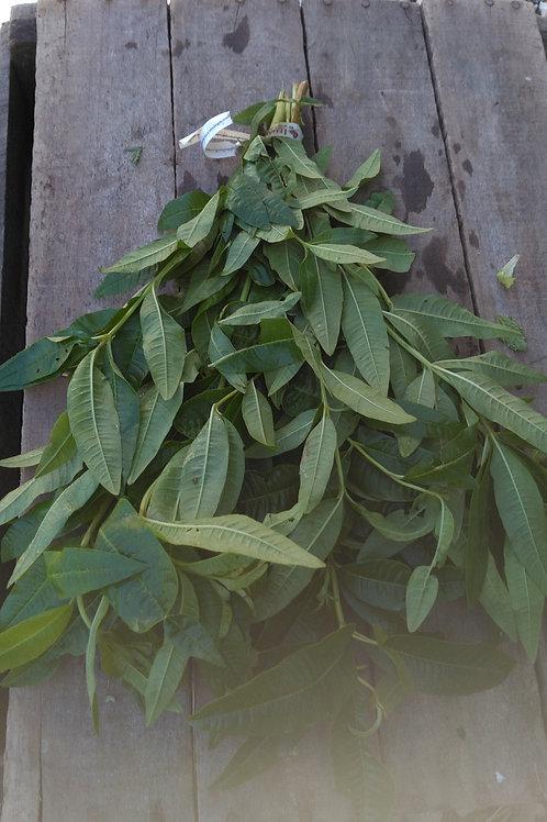 Lemon Verbena - 1 Bunch