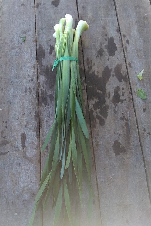 Garlic Chives - 1 Bunch