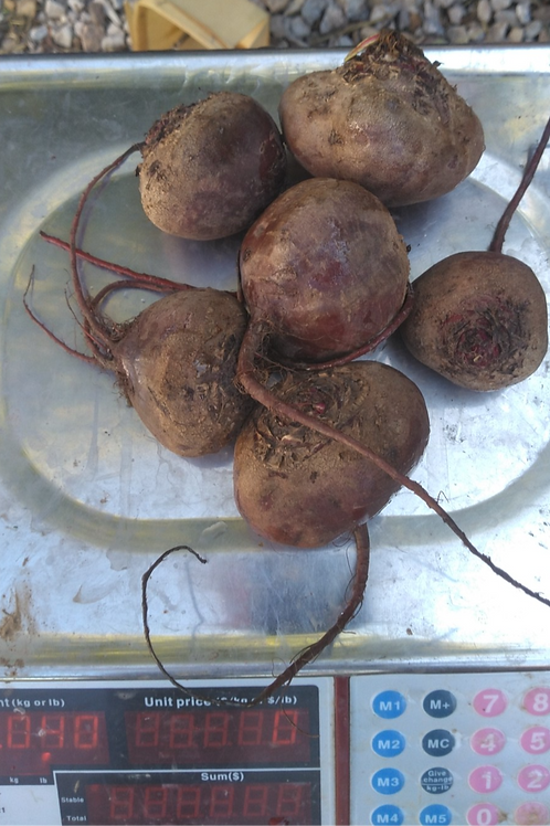 Red Beets - 1 Pound