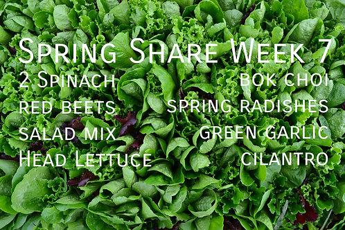 Spring Share Week 7