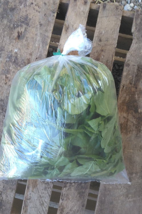 Spinach - 1 Bag