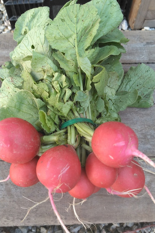 Red Radish - 1 Bunch