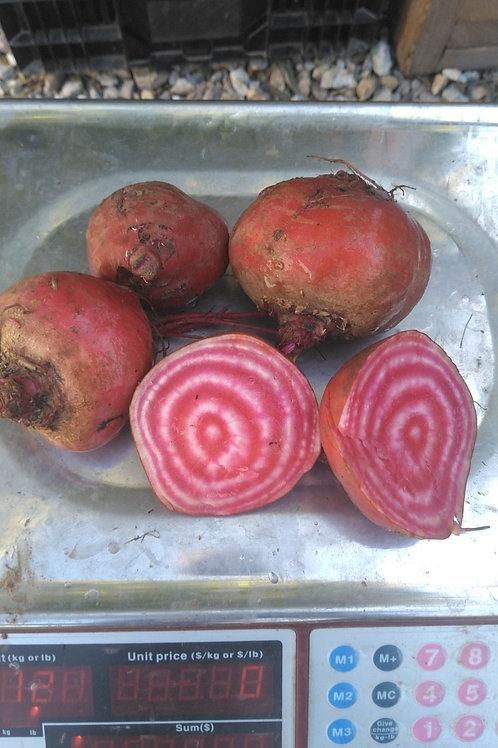 Chioggia (Candy-striped) Beet - 1 Pound