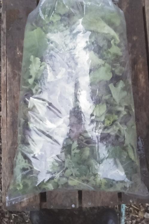 Salad Mix - 1 pound