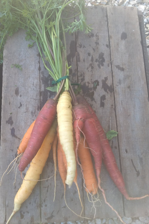 FRESH Rainbow Carrots - 1 bunch