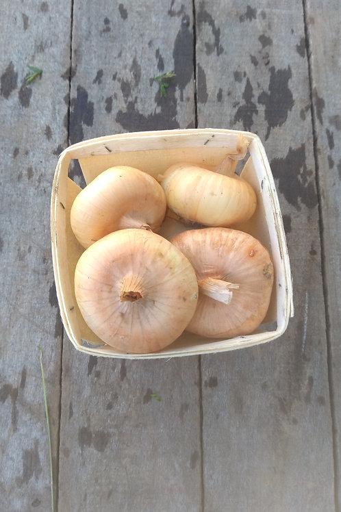 Yellow Cippolini Onion - 1 Pint