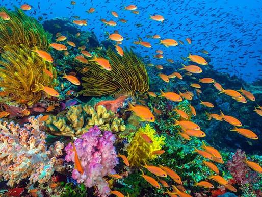 Recifes de coral e os seres humanos