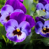 bloom-blossom-close-up-57394 (1).jpg