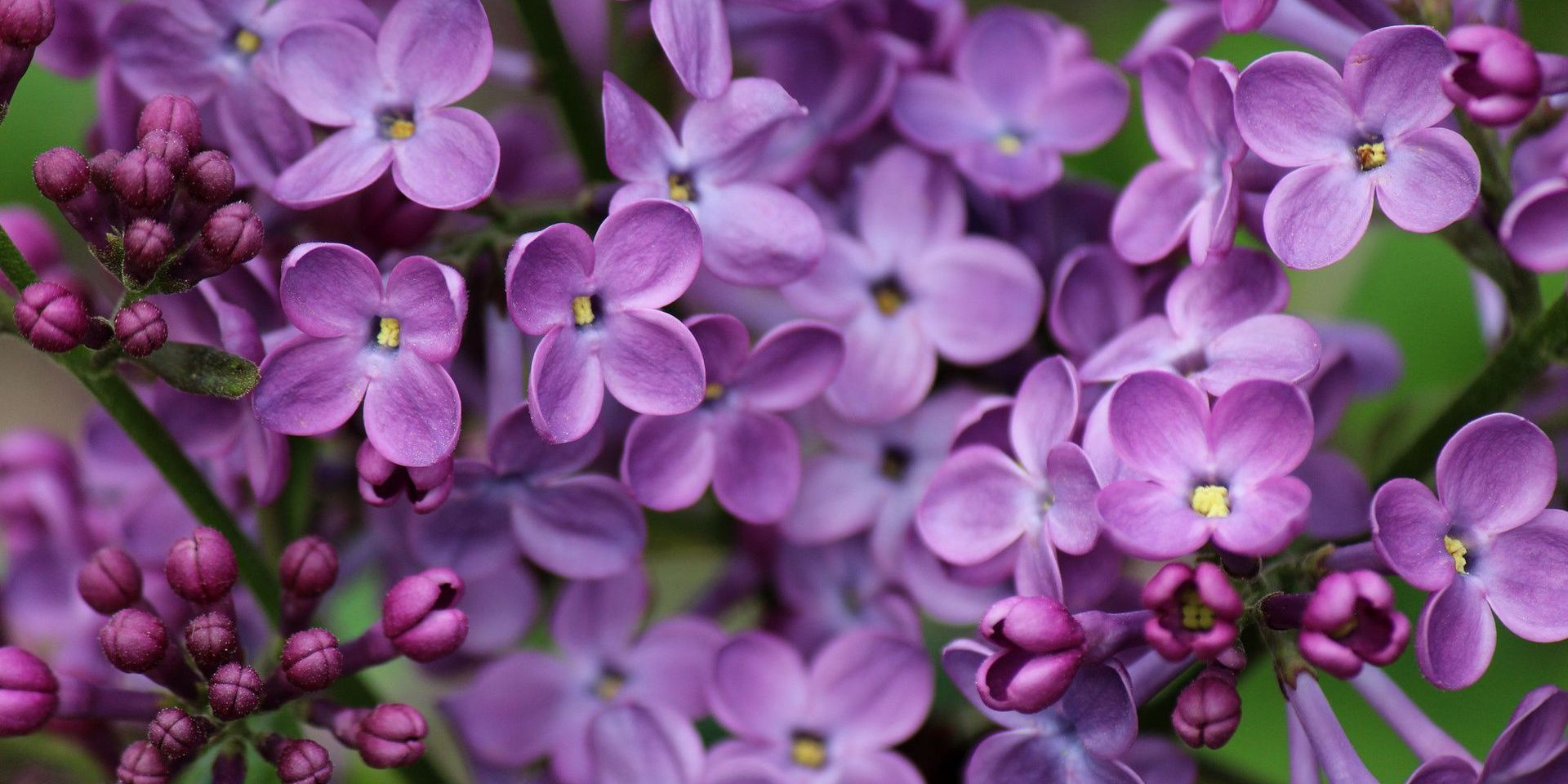 68138577-lilac-wallpapers.jpg
