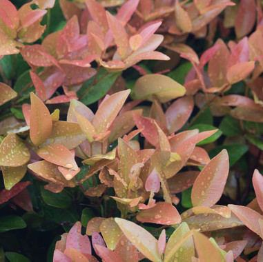 bright-close-up-colors-211624.jpg