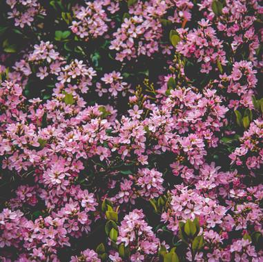 beautiful-bloom-blooming-691374.jpg