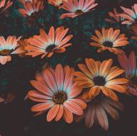 art-beautiful-bloom-1477166.jpg