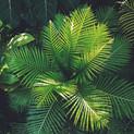 environment-fern-garden-1055379.jpg