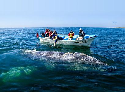 optimizada_villa-del-palmar-loreto-whale