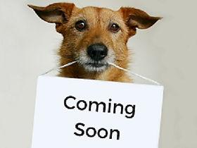 Dog+Coming+Soon+small.jpg