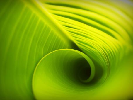 Fotossíntese = energia das plantas