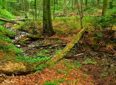 Terra de mato