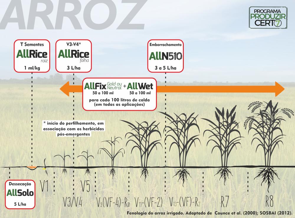 Escala fenológica do ARROZ