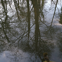 Reflections in the pond