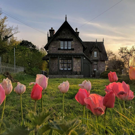 Tulips at East Lodge