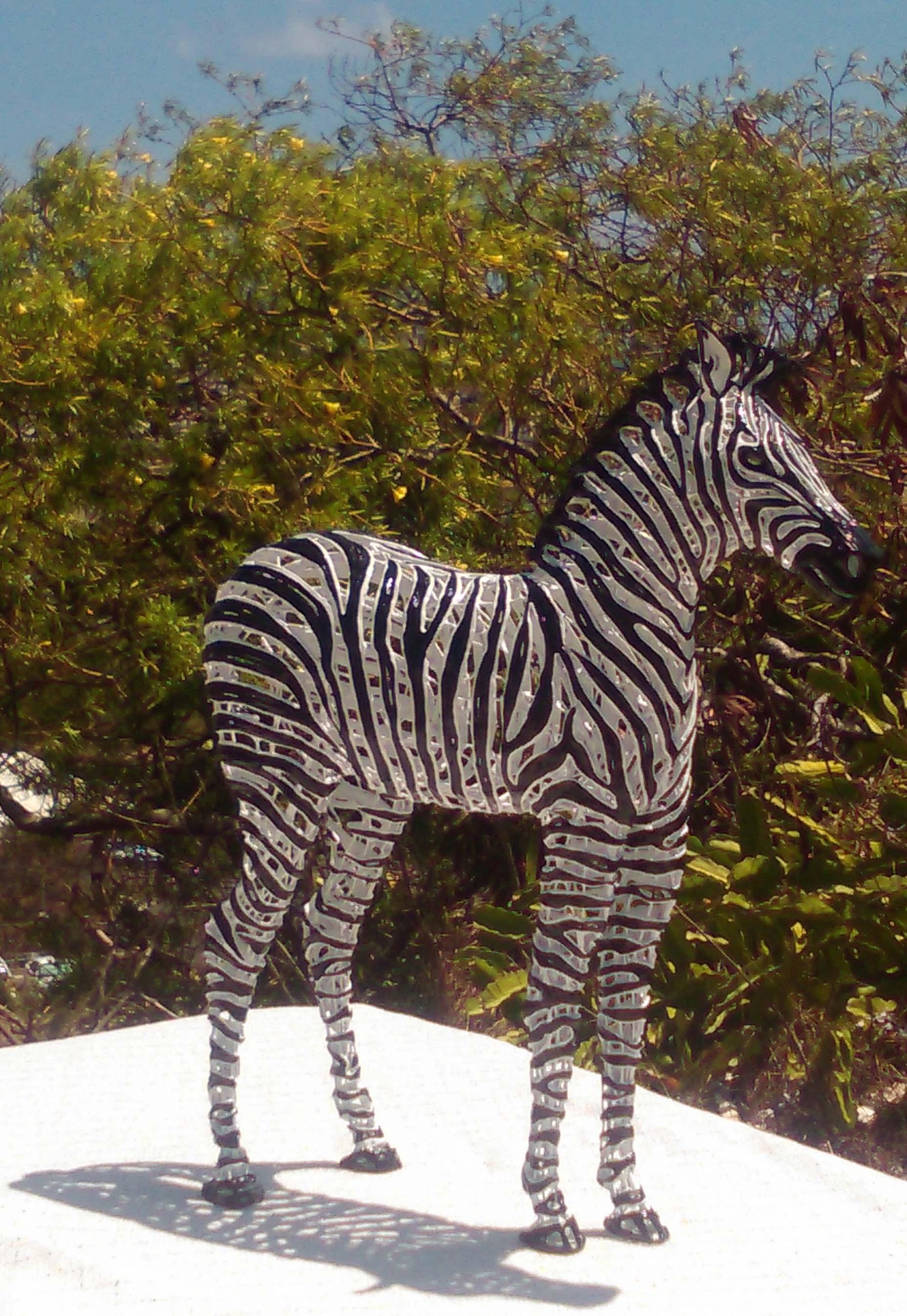 July Zebra