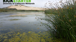 Kickstarter Project: Diversity of California Wetlands
