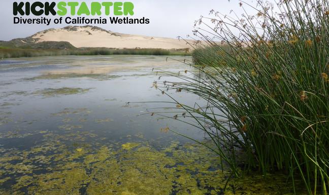 Kickstarter Project: Diversity of California Wetlands