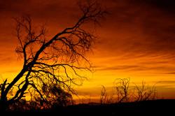 Topanga Canyon Sunrise (Orange).jpg
