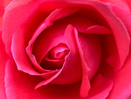 """""""Im Zeichen der Rose"""""""