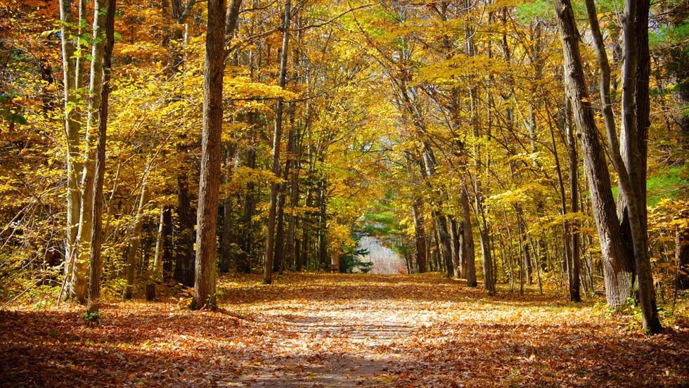 Autumn_3587_Nauman.jpg