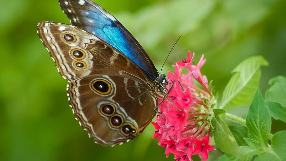 Butterfly DSC_2312 b_Nauman.jpg
