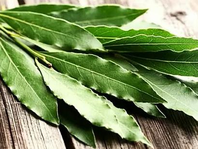 Лавровый лист-пищевая ценность и лечебные свойства