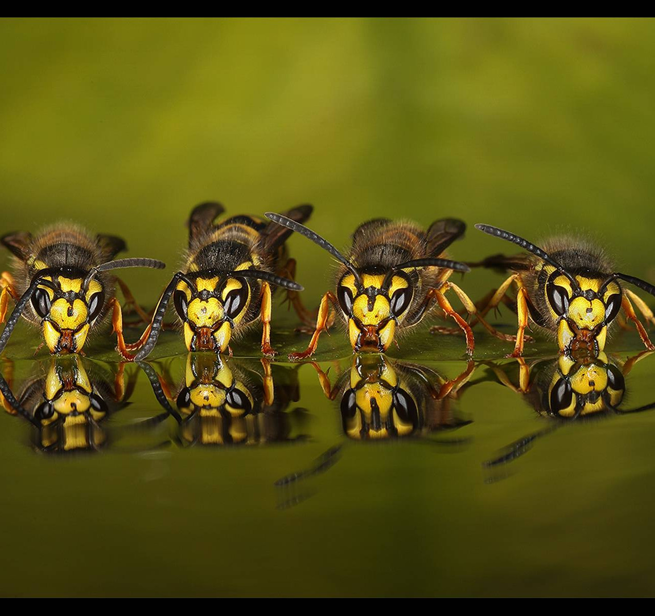 8338_Roy Rimmer_Four Wasps Drinking