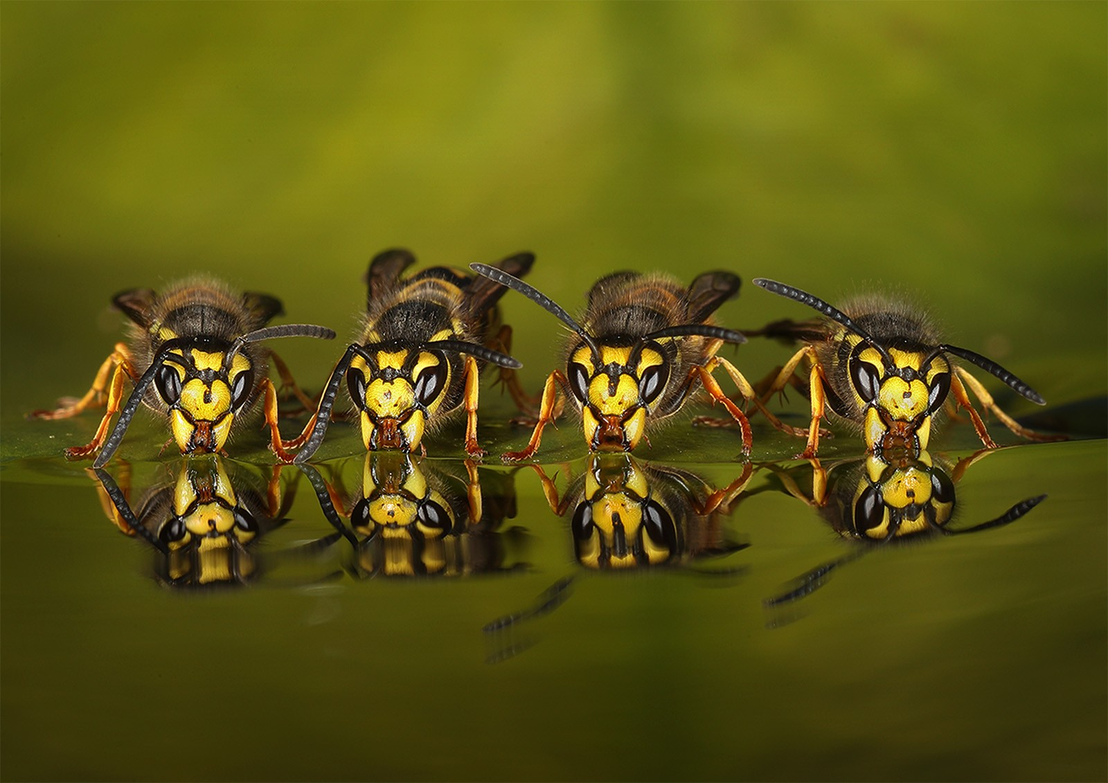 Roy Rimmer_Four Wasps