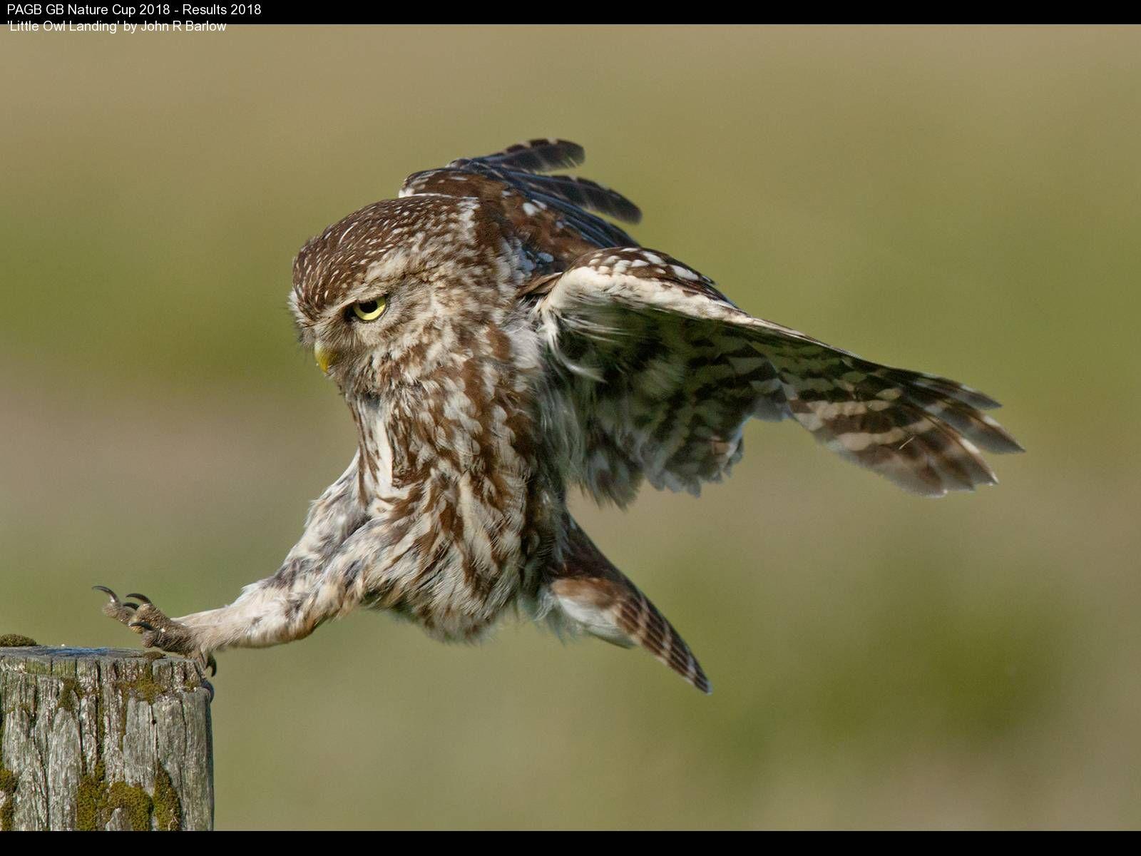 9369_John R Barlow_Little Owl Landing