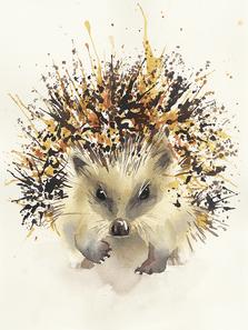Common Hedgehog