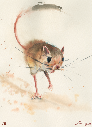 Small Mammals - 13X18 cm prints