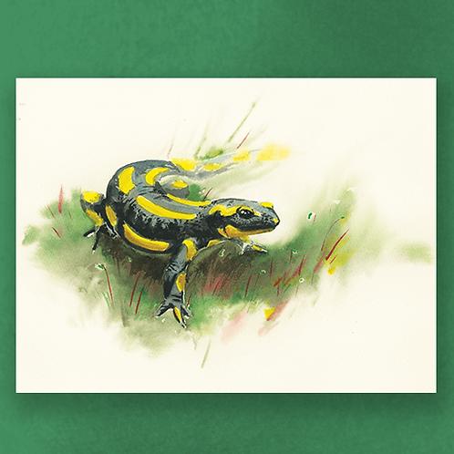 Fire Salamandra - 40X30cm print