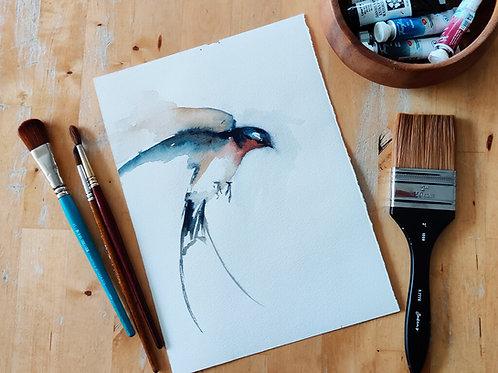 סנונית הרפתות Barn Swallow