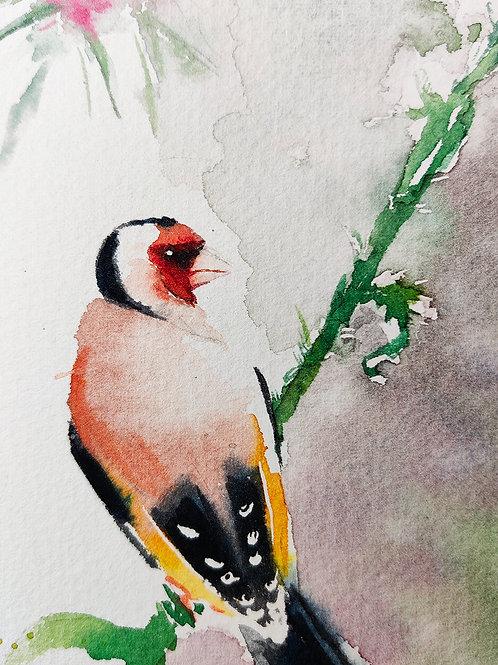 חוחית - סקיצה - Goldfinch - a sketch