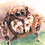 Thumbnail: עכביש קפצן - הדפס גדול Jumping spider - large print