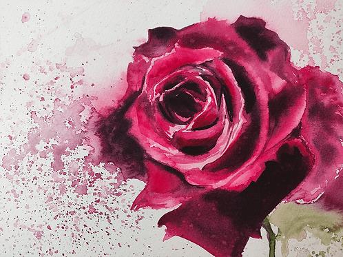 ורד של גדי Gadi's rose